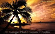 Image Watermark Studio - Sample #1